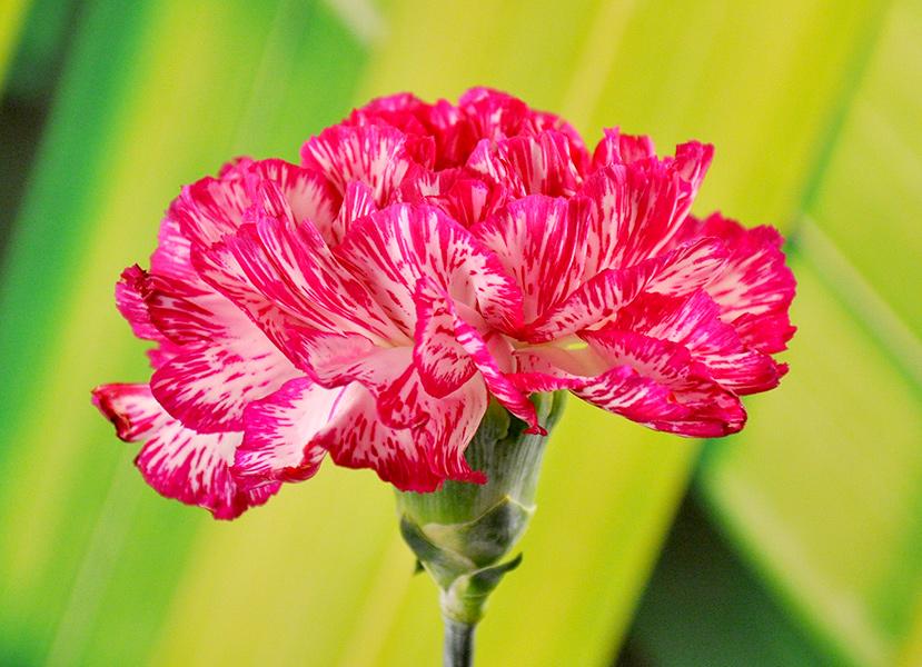 Florioja    U00b7  Flores De Color